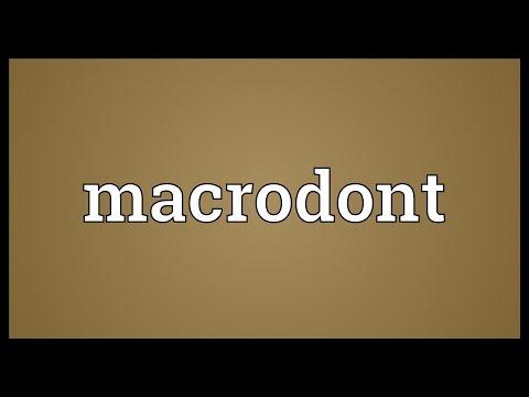 Header of macrodont