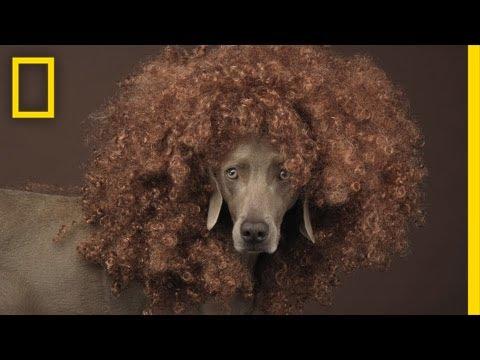 William Wegman Shoots February Dog Cover for Nat Geo Magazine | National Geographic