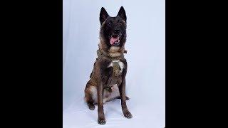 时事看台(许湘筠):紧追巴格达迪的军犬名字为何是机密?