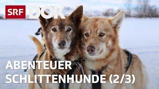 Abenteuer Schlittenhunde | Mit Huskys unterwegs in Finnisch Lappland (2/3) | Doku | SRF DOK