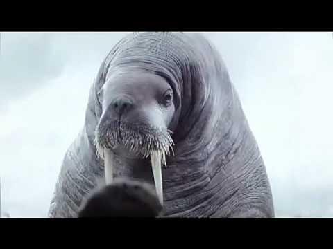 Spot Vigorsol Walrus Funny Commercial Youtube