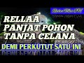 Rela Panjat Pohon Tanpa Celana Demi Perkutut Kidang Kencana  Mp3 - Mp4 Download