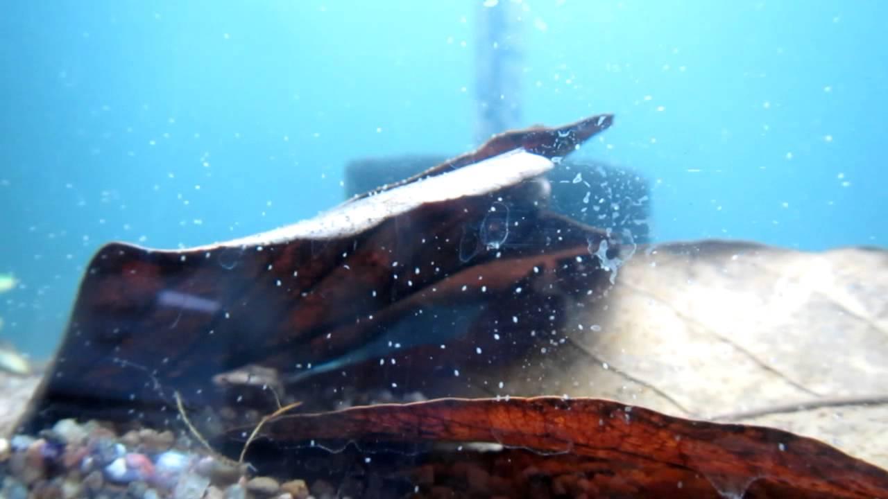Unidentified little white creatures in aquarium - YouTube