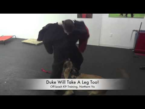 personal-protection-training-at-off-leash-k9-training-northern-virginia