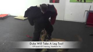 Personal Protection Training At Off-leash K9 Training Northern Virginia