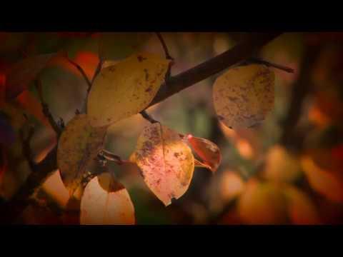 Jesienny czas w Sandomierzu