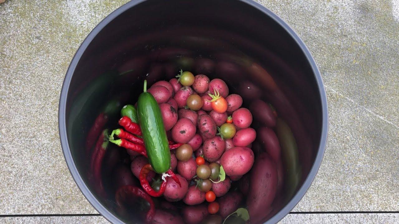 TM21#28 : Oogst aardappelen in potten