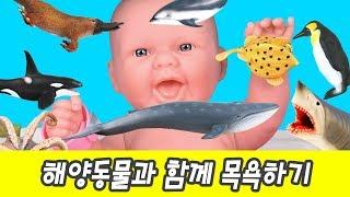 한국어ㅣ해양동물과 함께 목욕하기!! 어린이 만화, 해양동물 이름 외우기, 교육영상, 컬렉타 #159ㅣ꼬꼬스토이