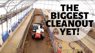 CLEANING THE ENTIRE SHEEP BARN IN TWO DAYS!  Vlog 250