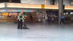Hundetrainer Arne Pohlmeyer Hundeschule Walsrode Hannover Begleithund am Flughafen