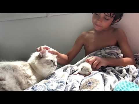 Boy's First Snuggles With 1 Week Old Ragdoll Kitten | Luke and Dash