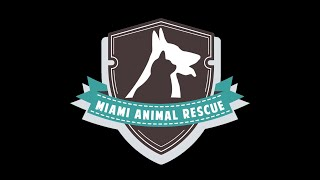 """We Rescued Each Other"" - Miami Animal Rescue"