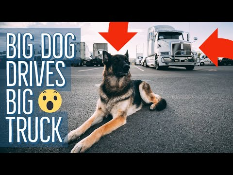 A Day In The Life Of A Truck Driver | Cute Puppy Edition