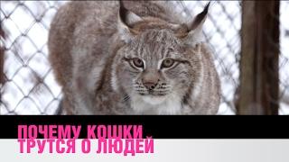 видео Ответы на популярные вопросы и интересные факты про кошек