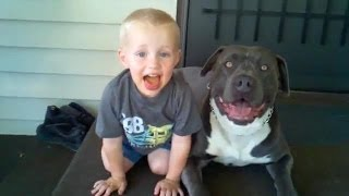 Pit Bulls Playing With Babies Compilation 2014 || Ahf