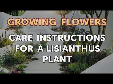 Care Instructions For A Lisianthus Plant Youtube