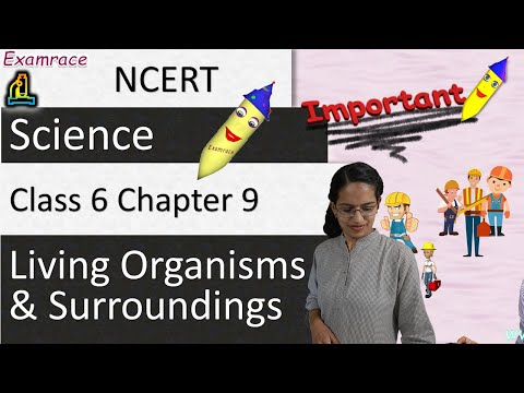 NCERT Class 6 Science Chapter 9: Living Organisms & Surroundings (NSO/NSTSE/Olympiad)