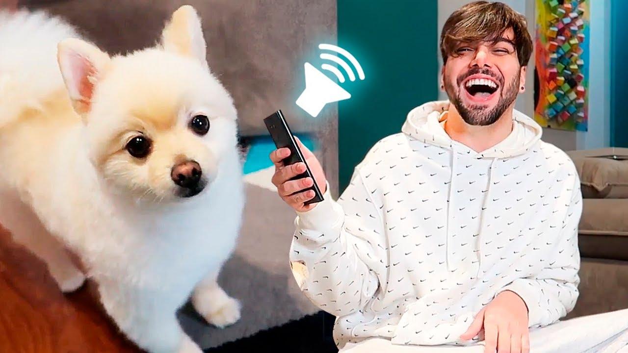 Testei o aplicativo que traduz os latidos do meu cachorro