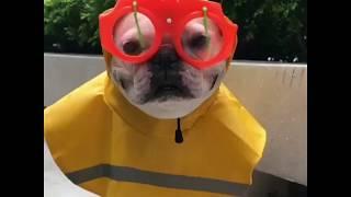 Смешные собаки и щенки | Топ-подборка видео приколов про собак