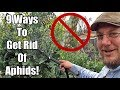 Are Aphids Destroying Your Garden? Here's What You Can Do!
