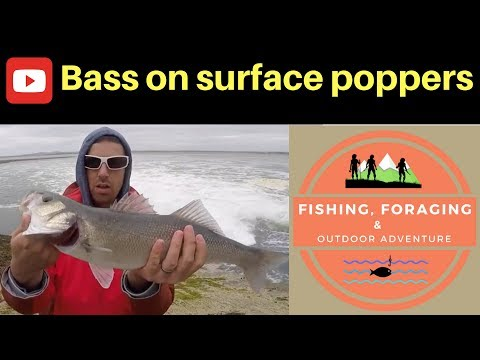 PLUGGING FOR BASS On Surface Poppers