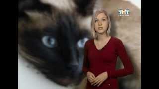 В области участились случаи заражения кошачьей чумой