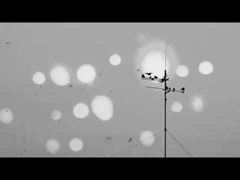 Pumarosa - Barefoot (fan video)