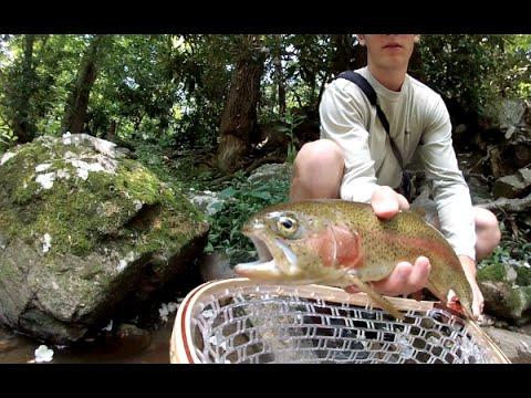 Mountainside - Summer Fly Fishing Cherokee North Carolina