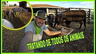 TRATANDO DE TODOS OS ANIMAIS NA SECA
