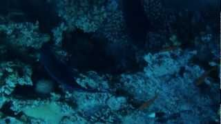 free diving with Nataliia Zharkova Dahab 2012.mp4