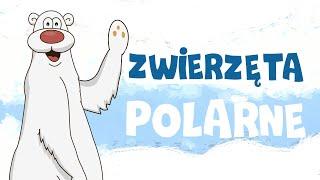 Zwierzęta polarne  dla dzieci  - bajki dla dzieci po polsku