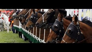 Betting the 2017 Preakness Stakes - Top Horses, Tips &  Betting Odds