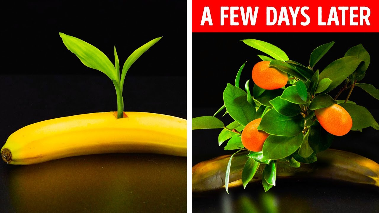 Download FANTASTIC PLANT HACKS AND DIY GARDENING IDEAS ||  Your Dream Garden With 5-Minute Crafts VS