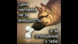 И Собаки имеют Душу, как у Человека.