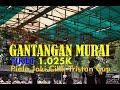 Gantangan Murai Batu Tiket  k Piala Joki Cilik Tristan Cup G T Enterprise Pondok Cabe By Hobi Id  Mp3 - Mp4 Download