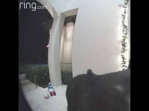 В дверь позвонил медведь