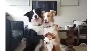 Семейное фото собачек)