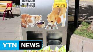 터키 유기견 살리는 '착한 자판기' / YTN