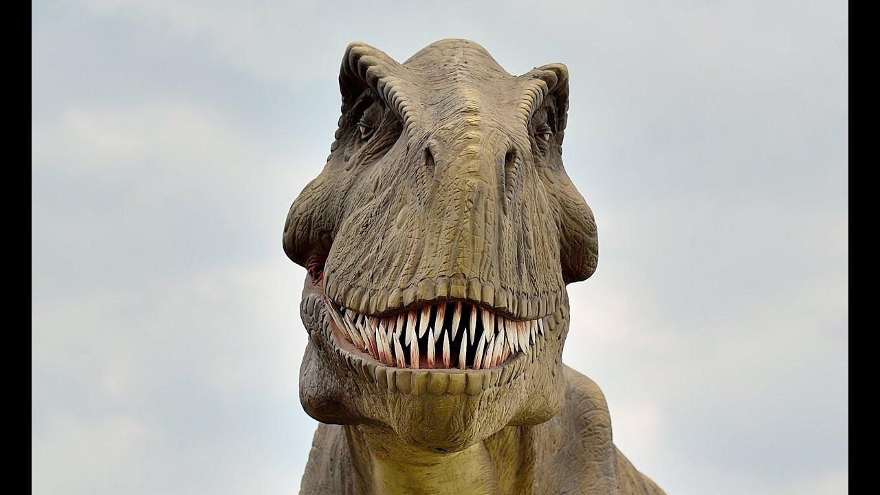 Dinosaurs Outdoor Exhibit