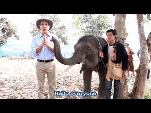 Protecting Elephants
