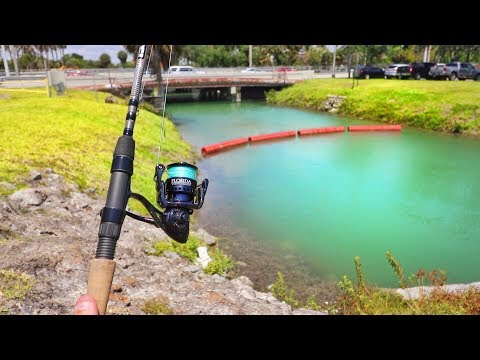 Catching AQUARIUM Fish In MIAMI CANALS! (HUGE PB)!