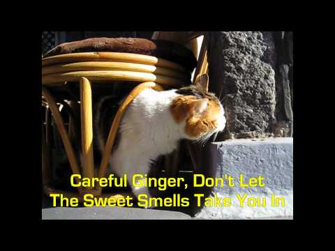 Ginger The Cat Escapes!