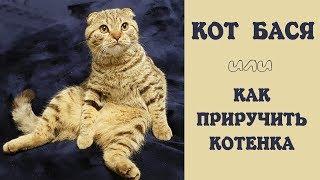 Кот Бася или как приручить котенка