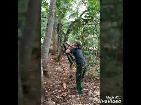 Barburu kalong/codot pakai senapan angin sharp garuda