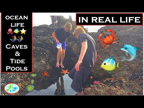 🔴LIVE at the KINGS Tide Pool - 2018