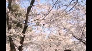 東海ラジオ 谷川明美のちょっと小粋な日曜日 2001年3月31日 1