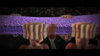 видео атф что это такое в биологии