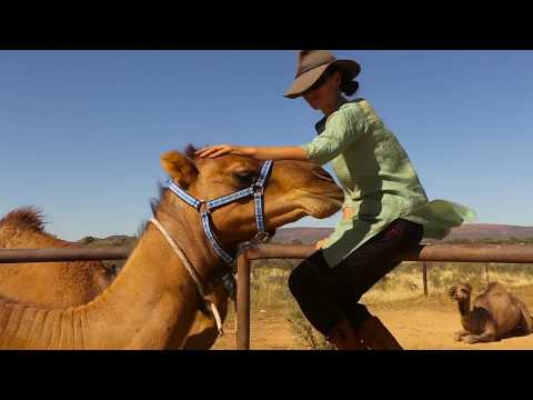 A day in the Camel yards with Camel Treks Australia Pty Ltd