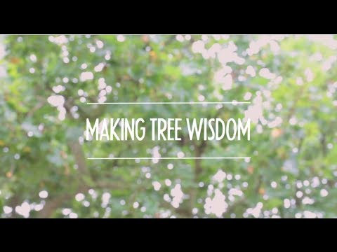 Making Tree Wisdom - Tutorial 1: Controlling lines in VideoScribe