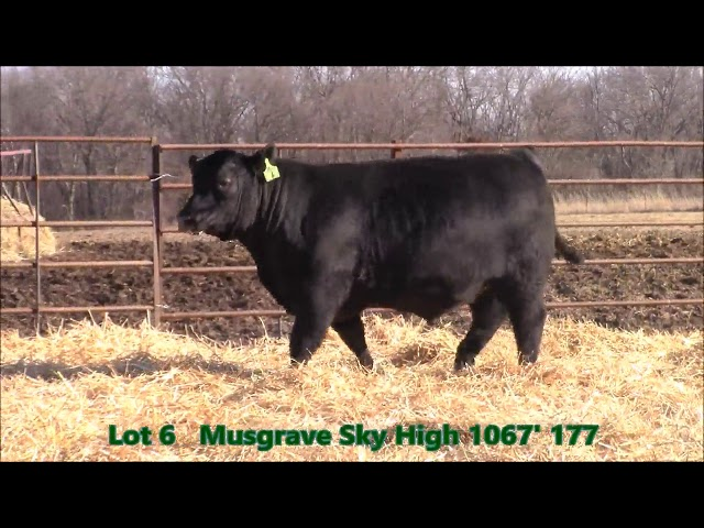 Musgrave Angus Lot 6
